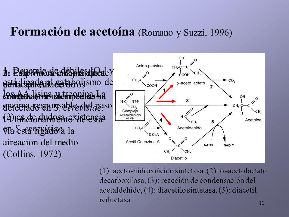 Formación de acetoína (Romano y Suzzi, 1996)