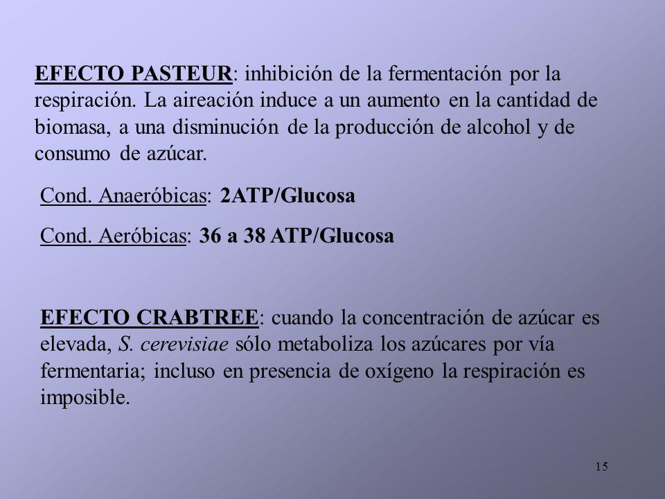 EFECTO PASTEUR: inhibición de la fermentación por la respiración