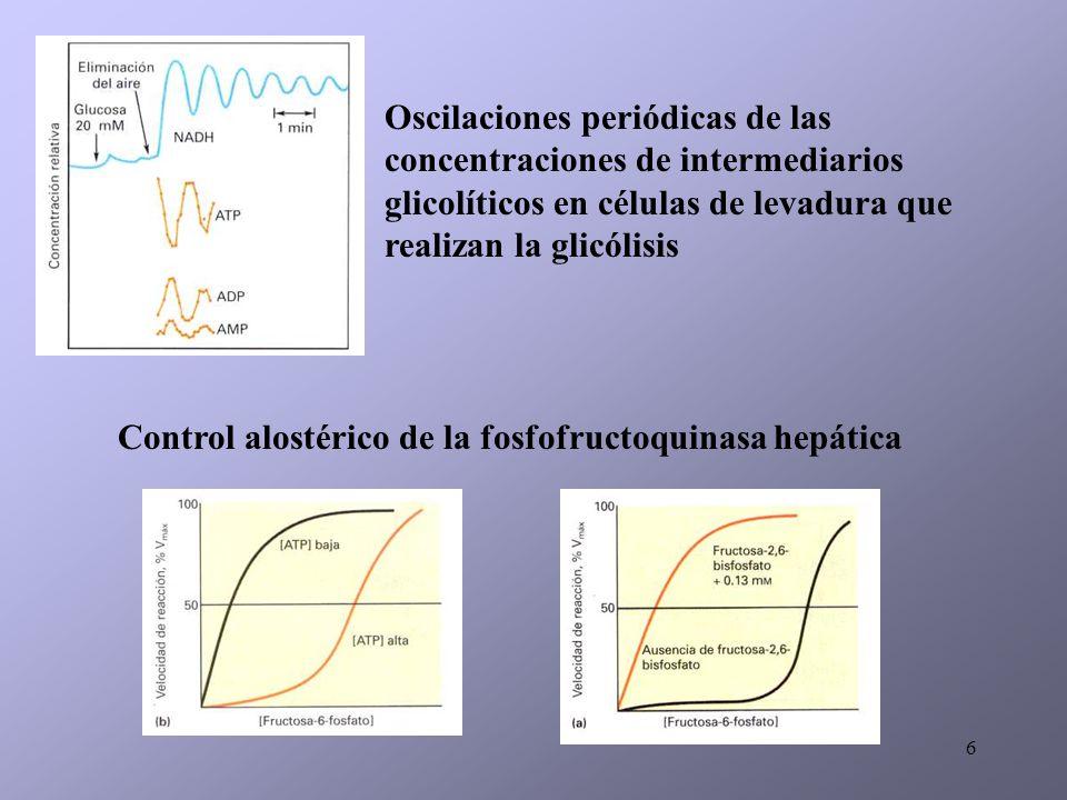 Oscilaciones periódicas de las concentraciones de intermediarios glicolíticos en células de levadura que realizan la glicólisis