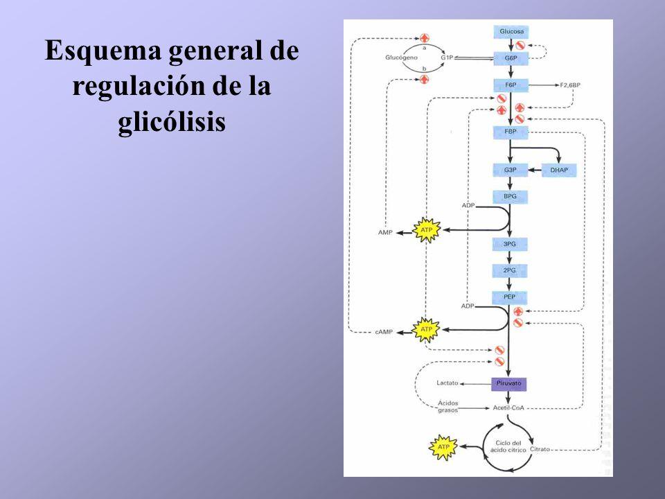 Esquema general de regulación de la glicólisis