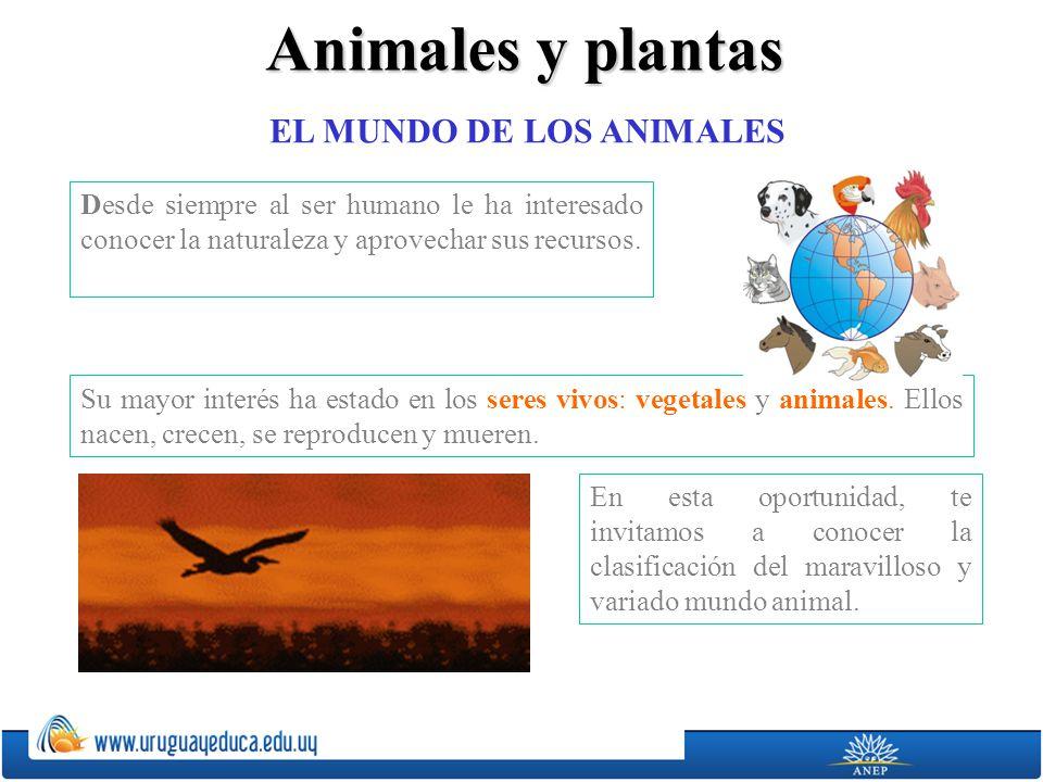 Animales y plantas EL MUNDO DE LOS ANIMALES