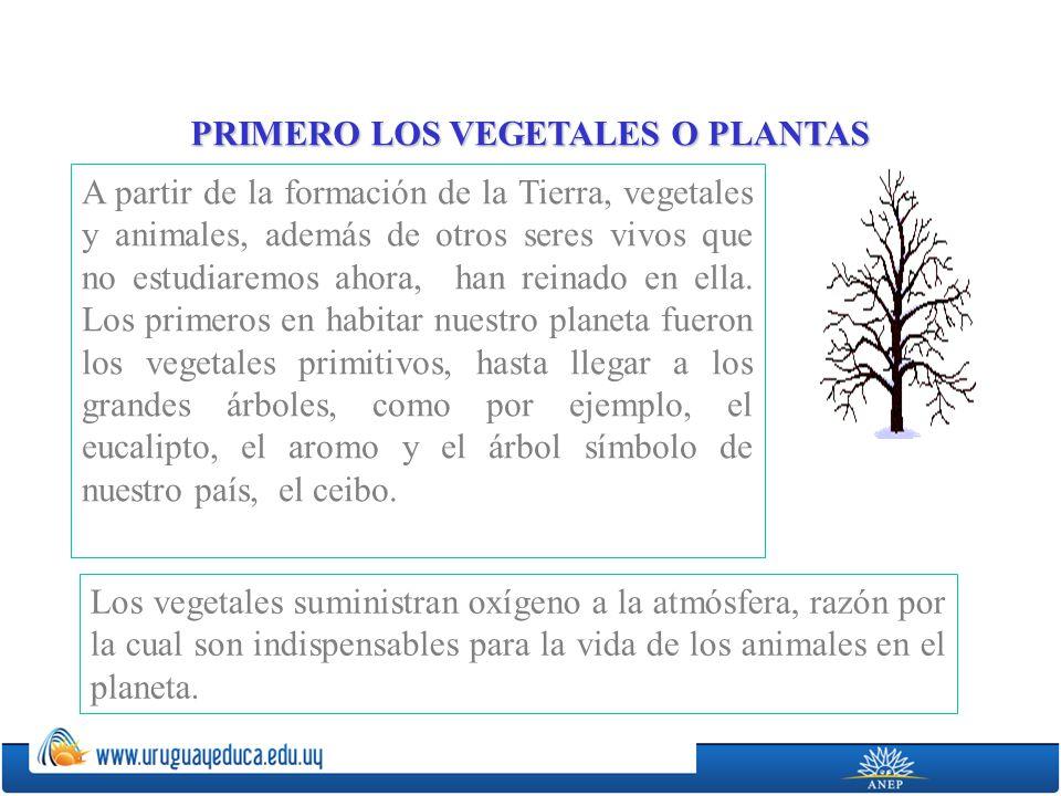 PRIMERO LOS VEGETALES O PLANTAS