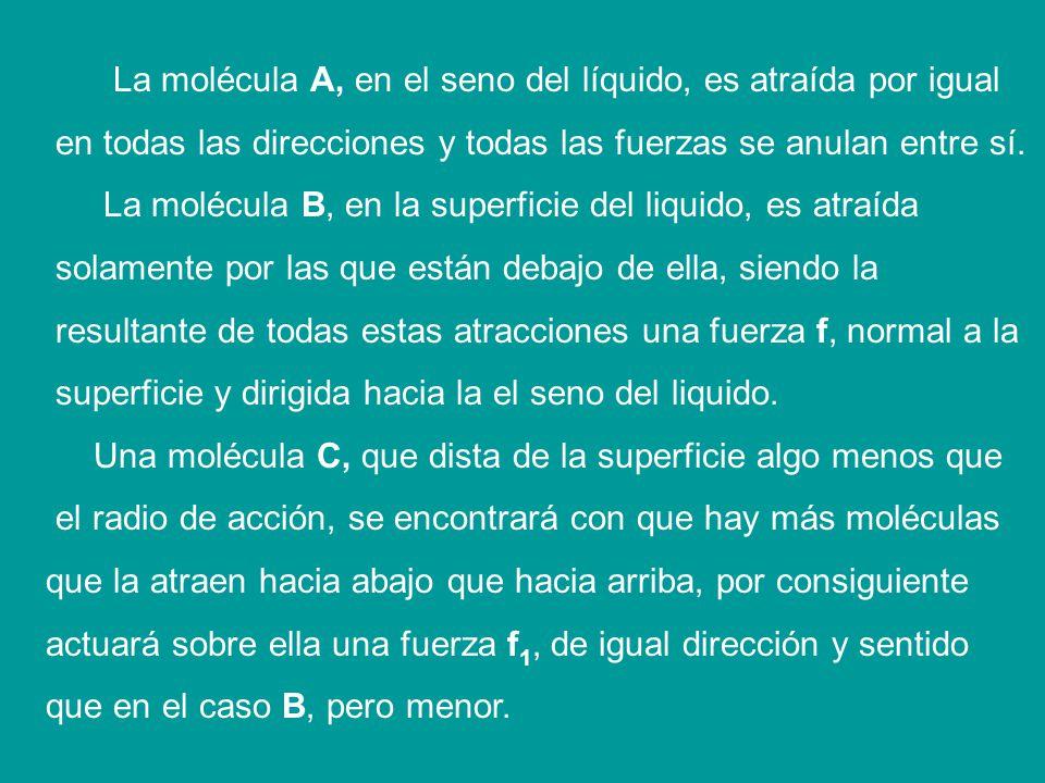 La molécula A, en el seno del líquido, es atraída por igual