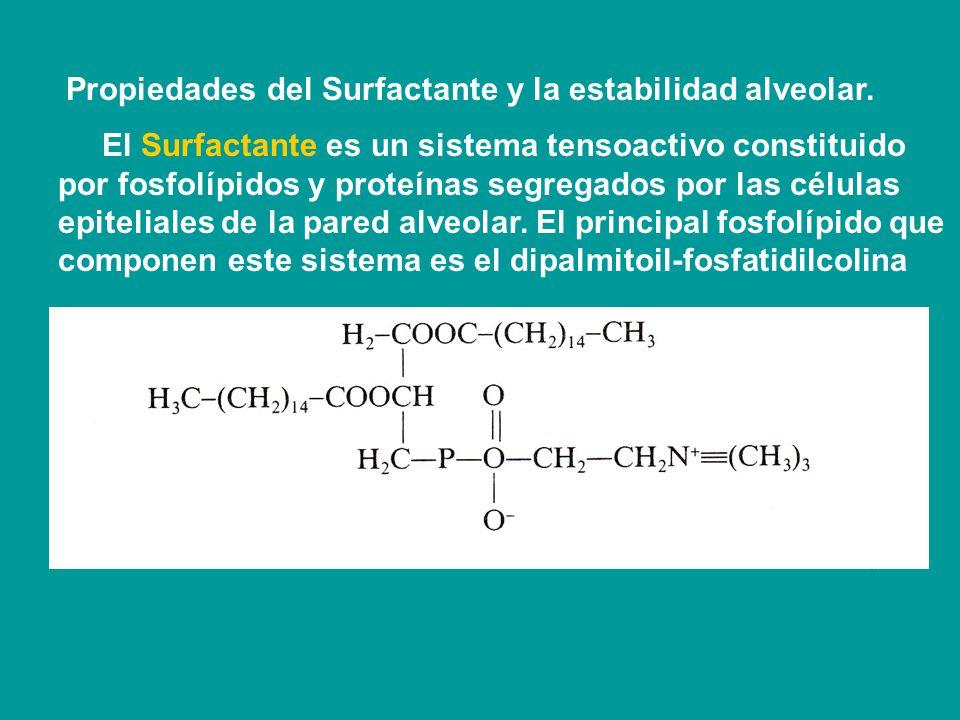 Propiedades del Surfactante y la estabilidad alveolar.