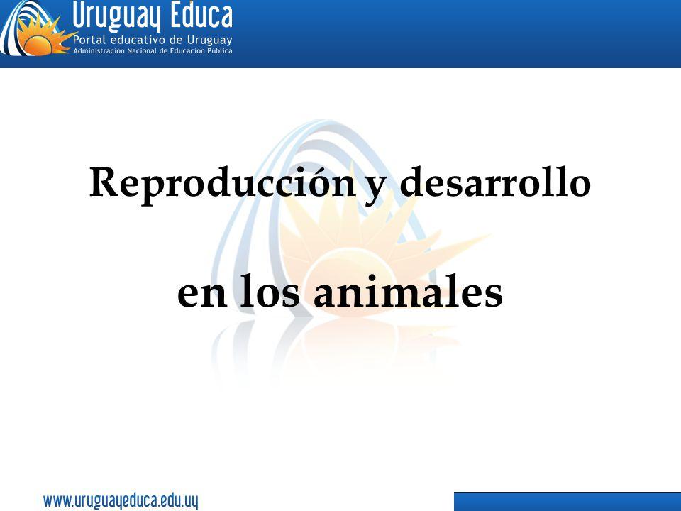Reproducción y desarrollo en los animales