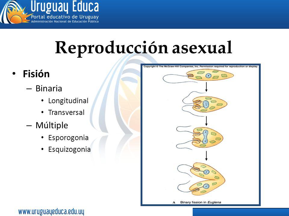 Reproducción asexual Fisión Binaria Múltiple Longitudinal Transversal