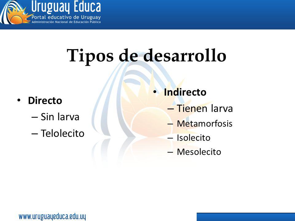 Tipos de desarrollo Indirecto Directo Tienen larva Sin larva