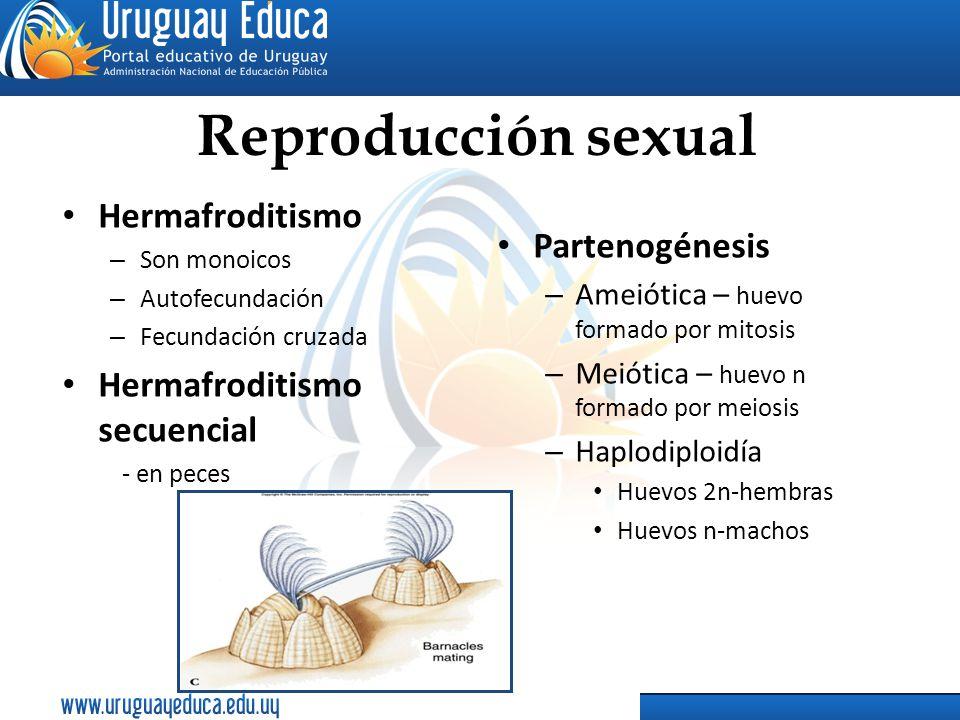 Reproducción sexual Hermafroditismo Partenogénesis