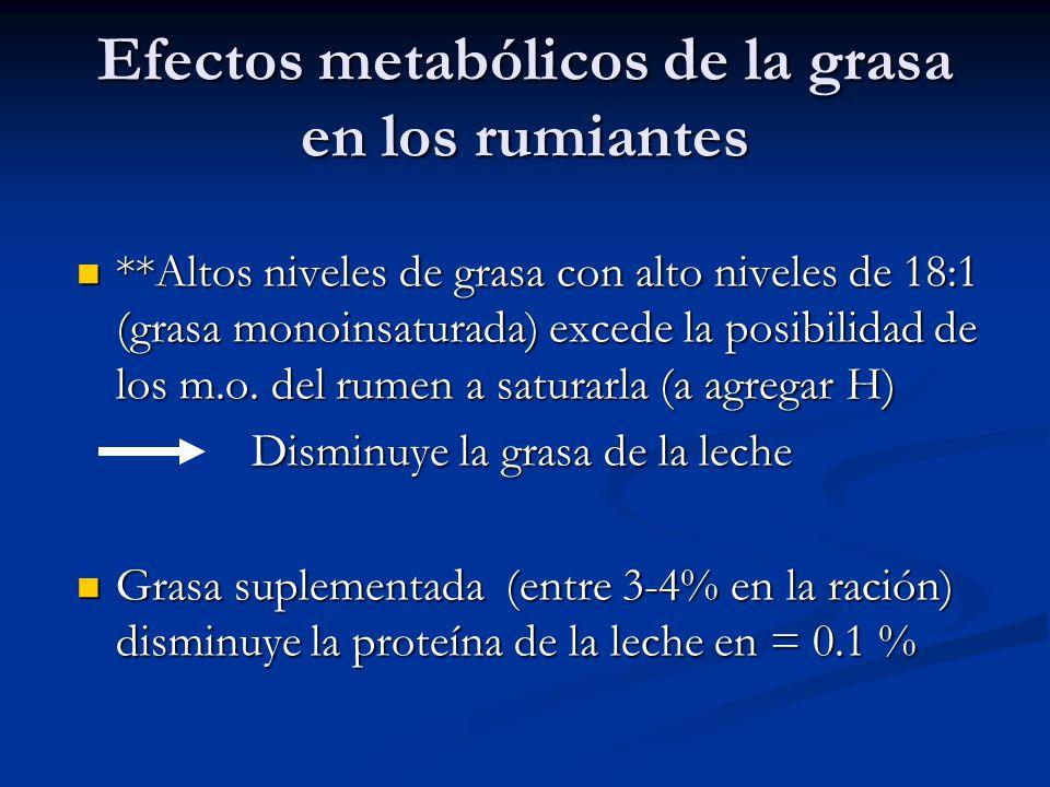Efectos metabólicos de la grasa en los rumiantes