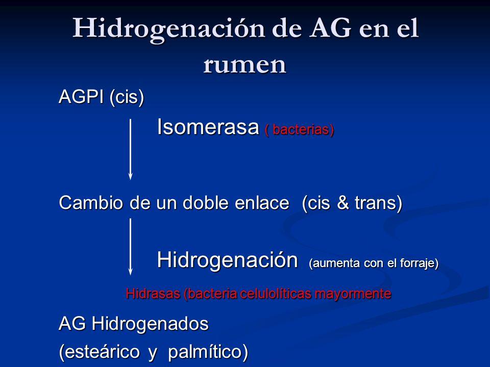 Hidrogenación de AG en el rumen