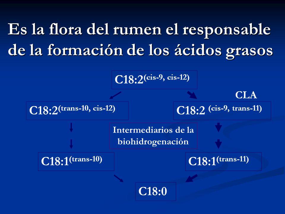 Intermediarios de la biohidrogenación