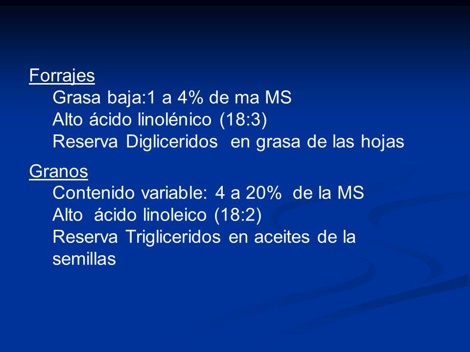 Forrajes Grasa baja:1 a 4% de ma MS. Alto ácido linolénico (18:3) Reserva Digliceridos en grasa de las hojas.