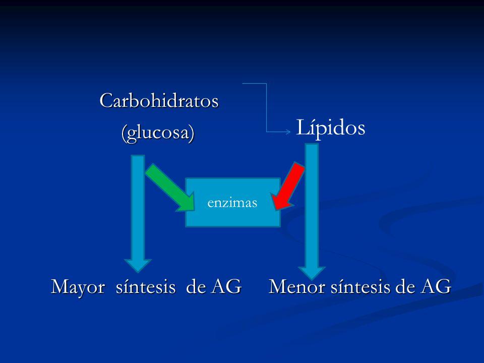 Carbohidratos (glucosa) Mayor síntesis de AG Menor síntesis de AG