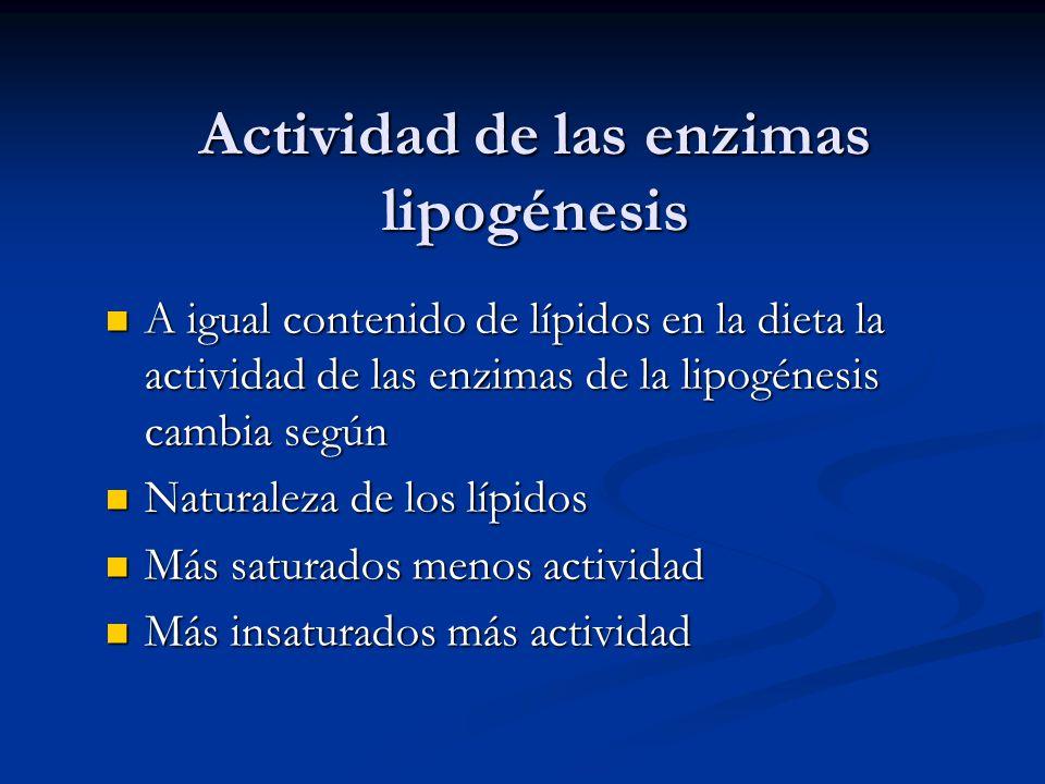 Actividad de las enzimas lipogénesis