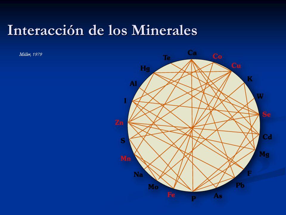 Interacción de los Minerales