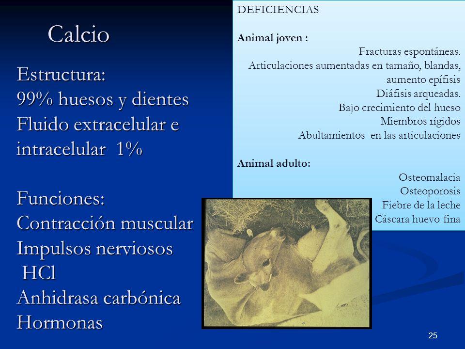 DEFICIENCIAS Animal joven : Fracturas espontáneas. Articulaciones aumentadas en tamaño, blandas, aumento epífisis.