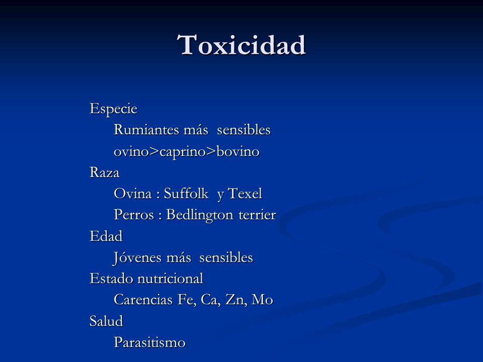Toxicidad Especie Rumiantes más sensibles ovino>caprino>bovino