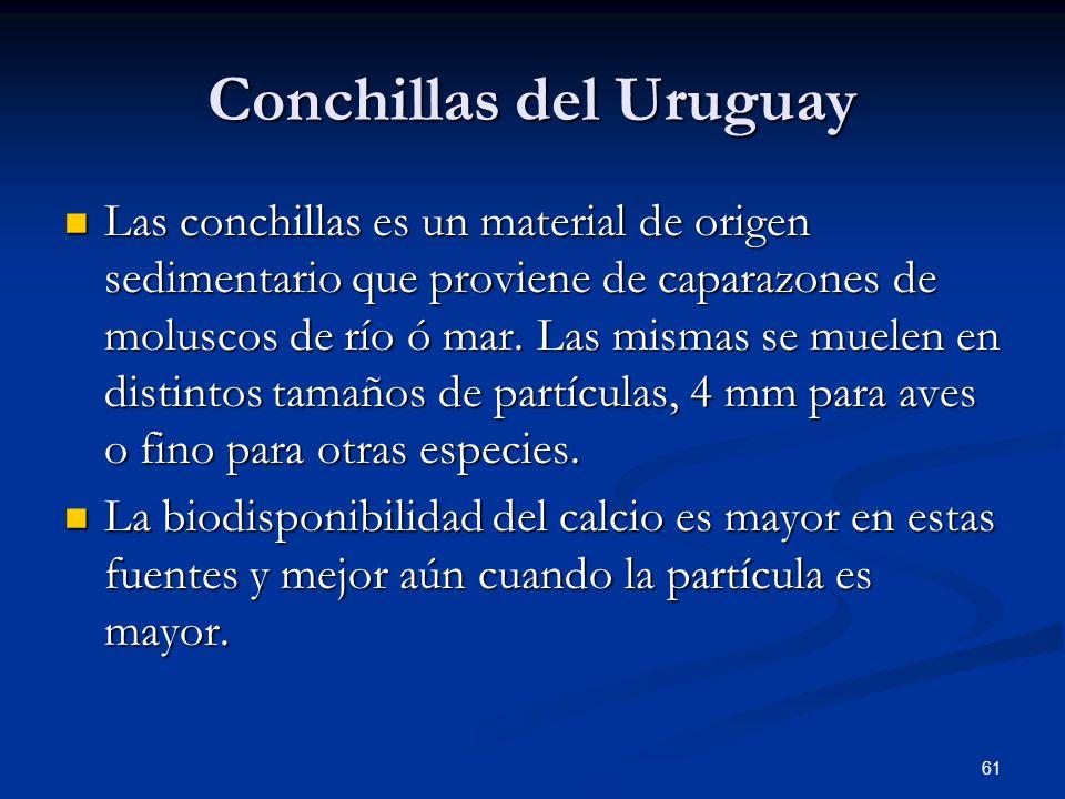 Conchillas del Uruguay