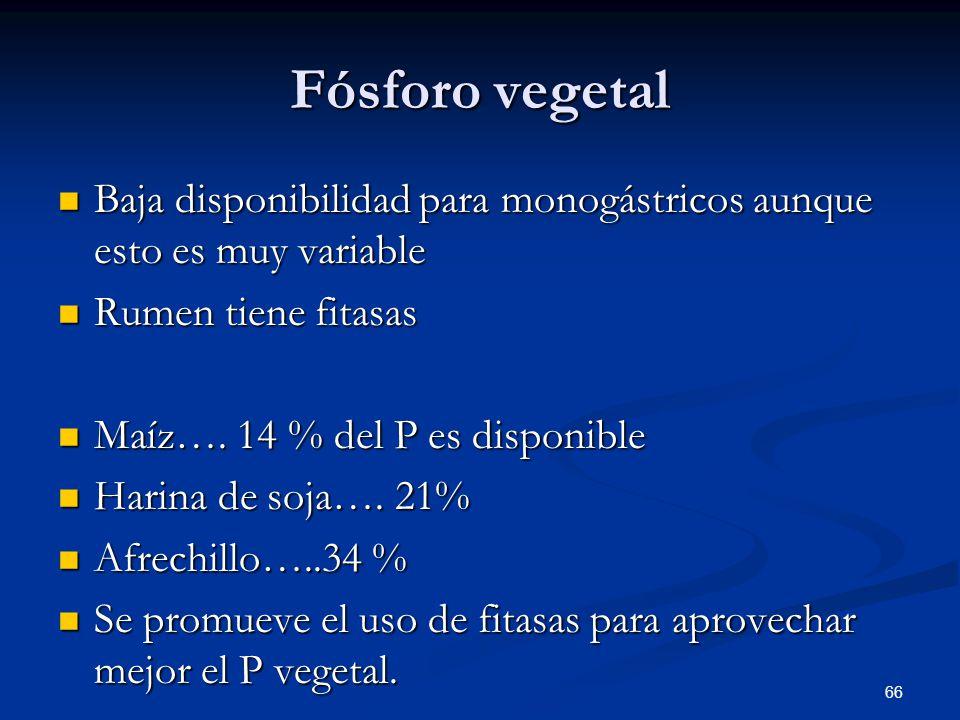 Fósforo vegetal Baja disponibilidad para monogástricos aunque esto es muy variable. Rumen tiene fitasas.