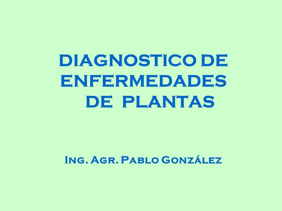 DIAGNOSTICO DE ENFERMEDADES DE PLANTAS Ing. Agr. Pablo González