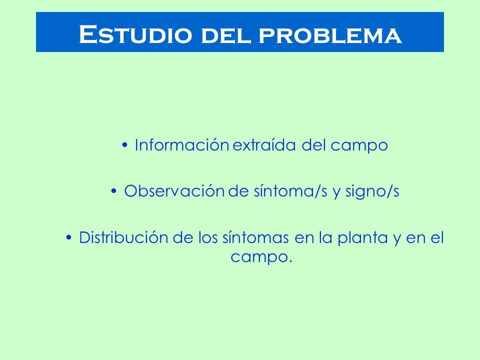 Estudio del problema Información extraída del campo