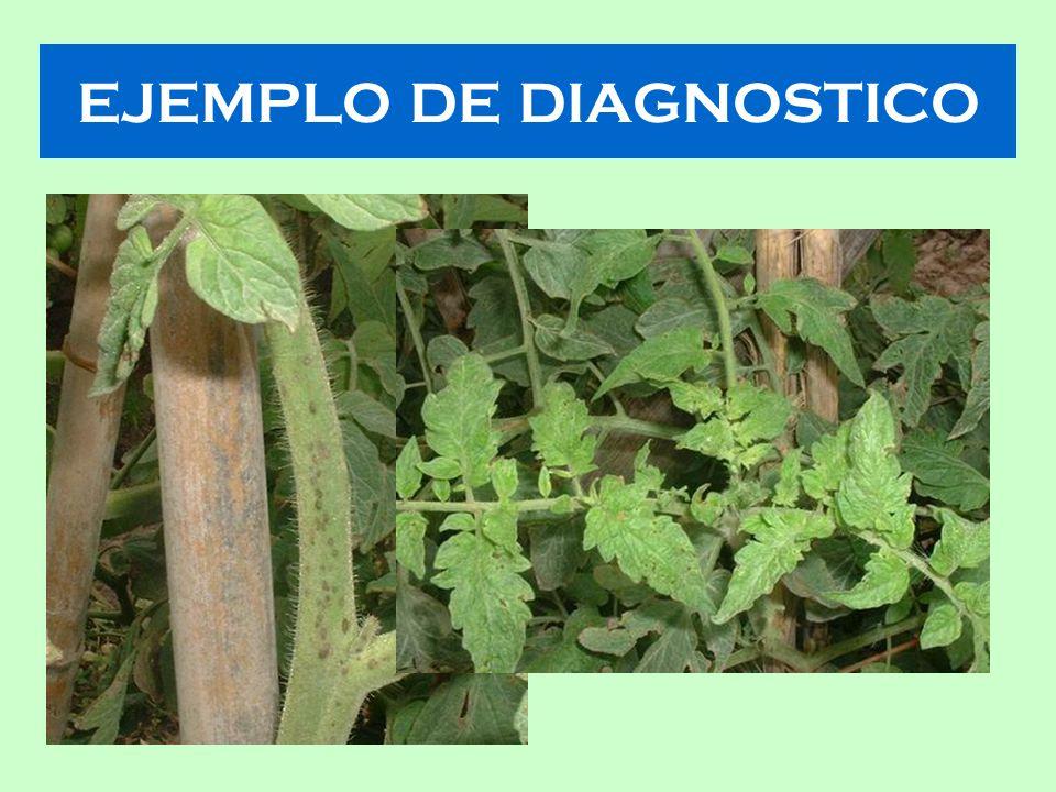 EJEMPLO DE DIAGNOSTICO