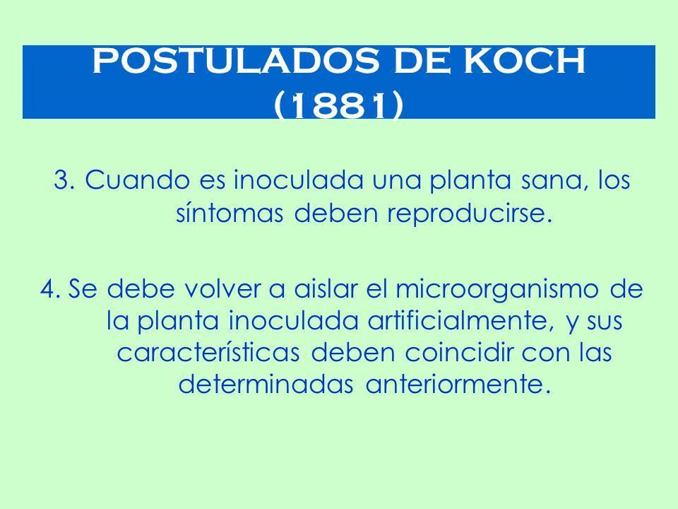 POSTULADOS DE KOCH (1881) 3. Cuando es inoculada una planta sana, los síntomas deben reproducirse.