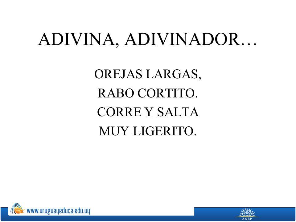 OREJAS LARGAS, RABO CORTITO. CORRE Y SALTA MUY LIGERITO.