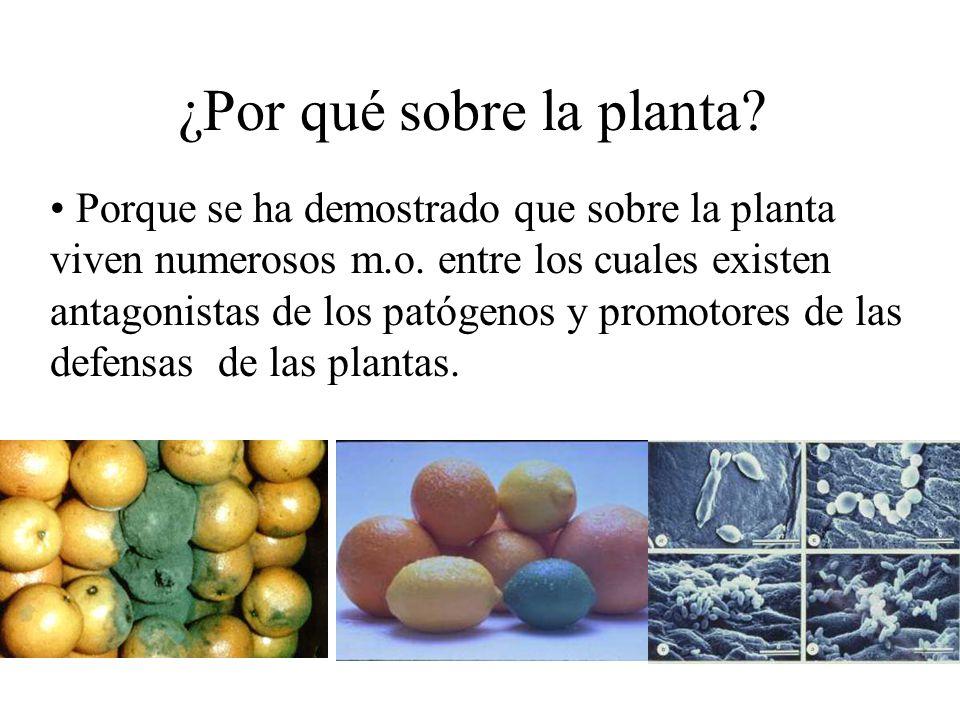 ¿Por qué sobre la planta