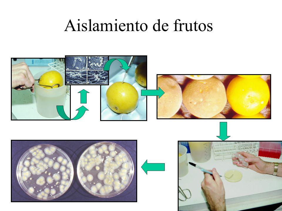 Aislamiento de frutos