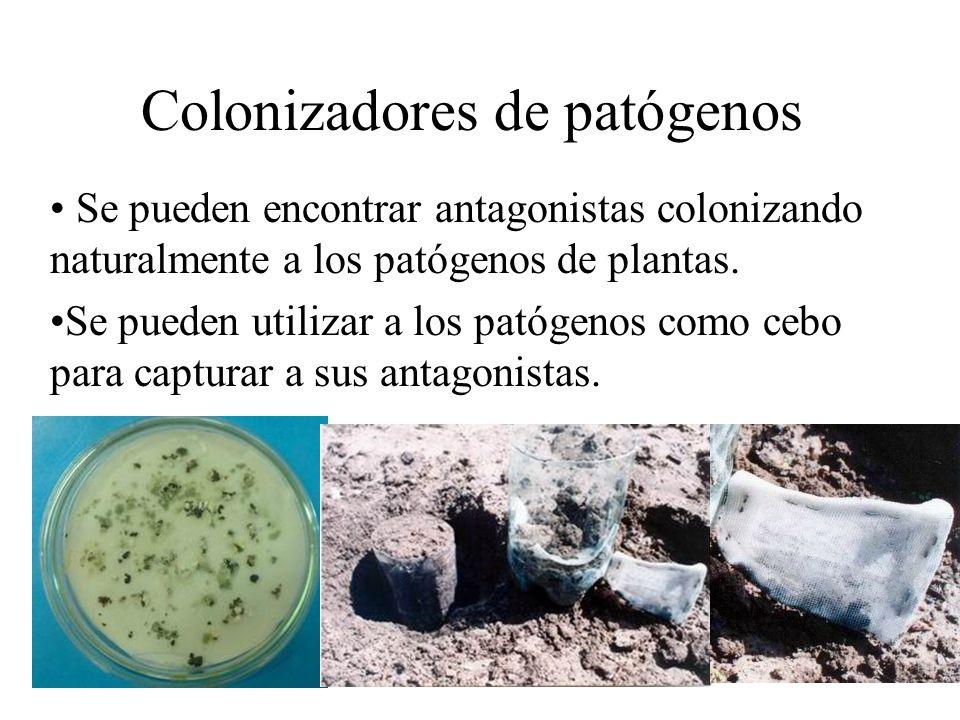 Colonizadores de patógenos