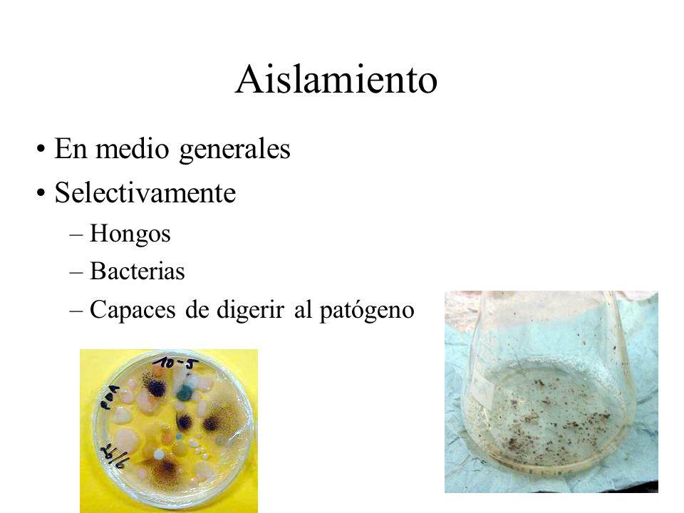 Aislamiento En medio generales Selectivamente Hongos Bacterias