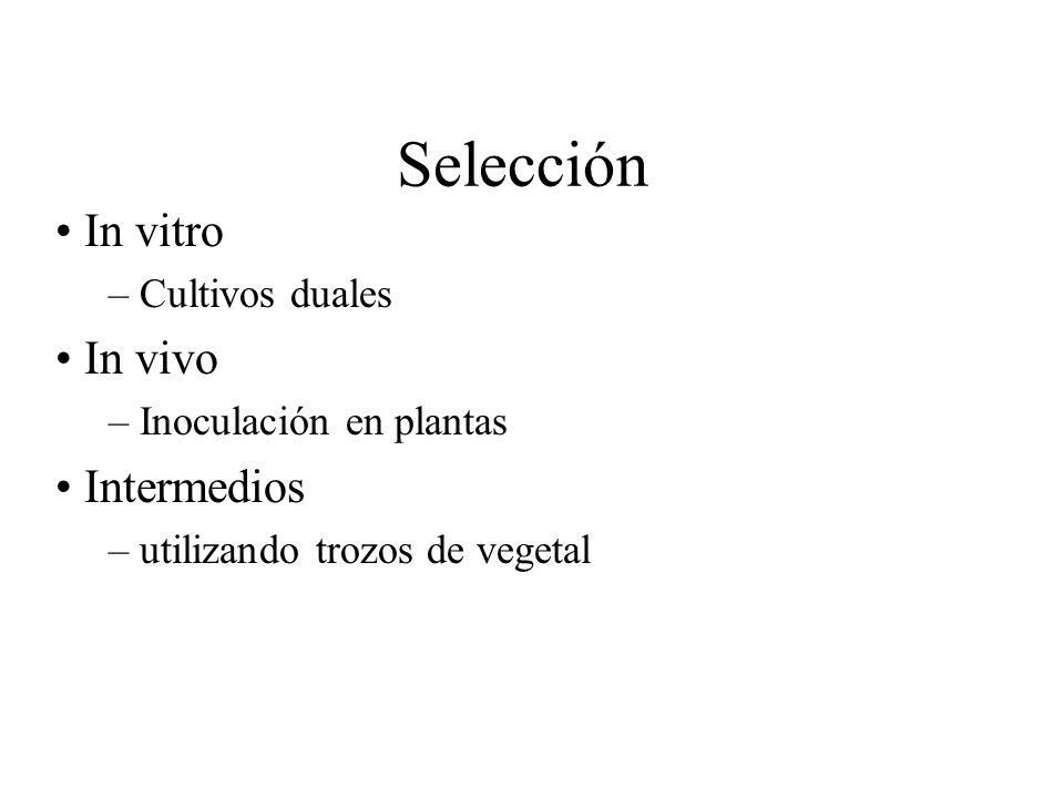 Selección In vitro In vivo Intermedios Cultivos duales