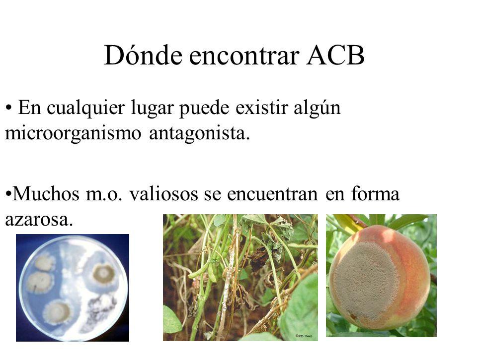 Dónde encontrar ACB En cualquier lugar puede existir algún microorganismo antagonista.