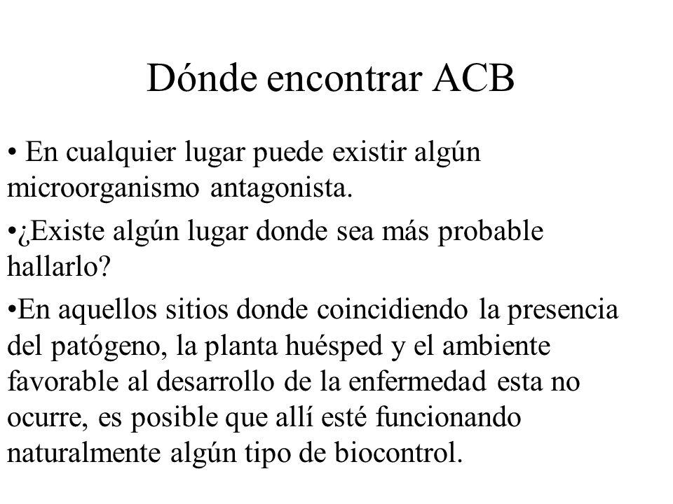 Dónde encontrar ACB En cualquier lugar puede existir algún microorganismo antagonista. ¿Existe algún lugar donde sea más probable hallarlo