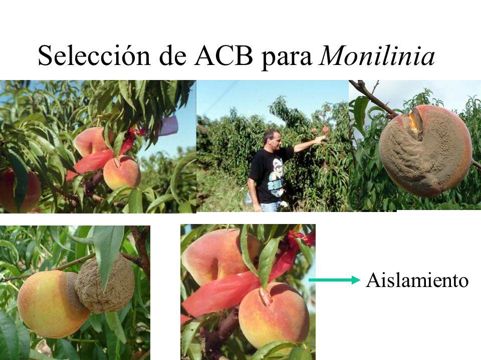 Selección de ACB para Monilinia