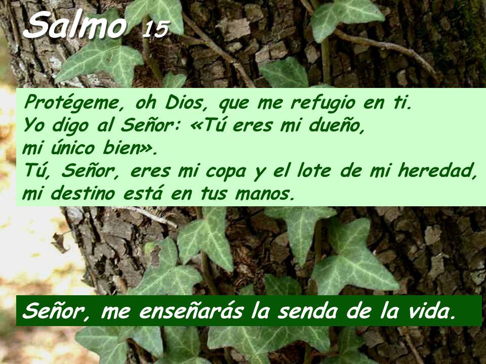 Salmo 15 Señor, me enseñarás la senda de la vida.