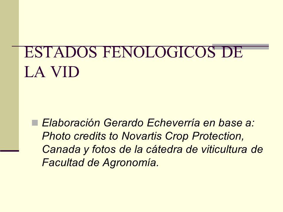 ESTADOS FENOLOGICOS DE LA VID