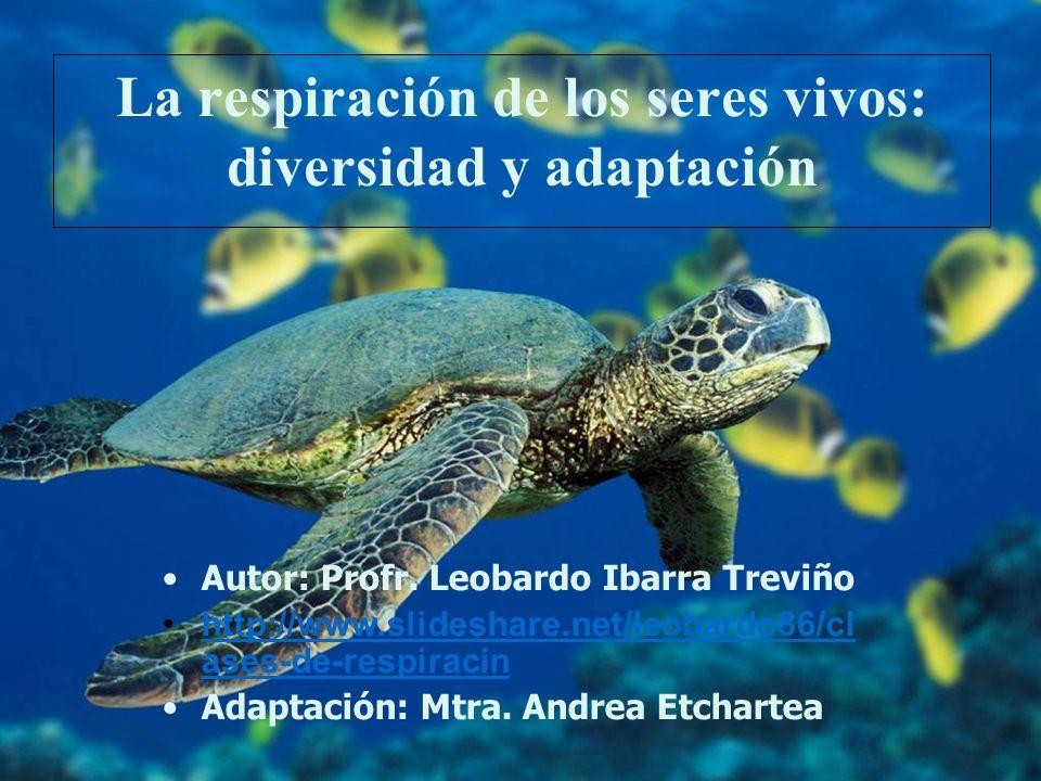 La respiración de los seres vivos: diversidad y adaptación