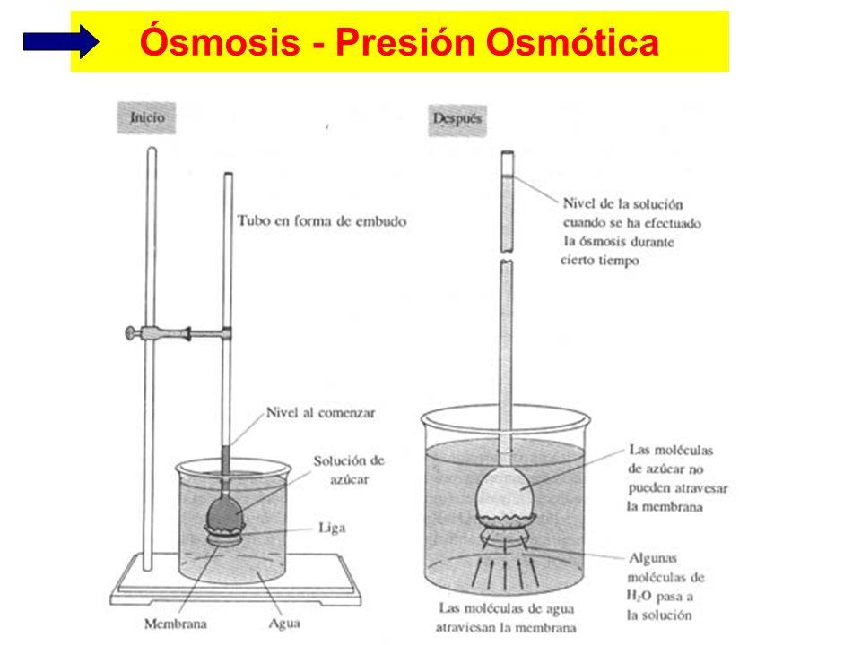 Ósmosis - Presión Osmótica