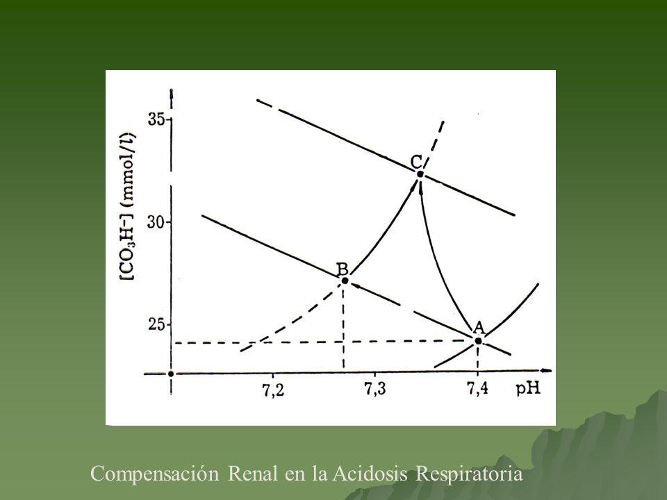 Compensación Renal en la Acidosis Respiratoria
