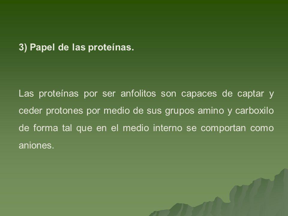 3) Papel de las proteínas.