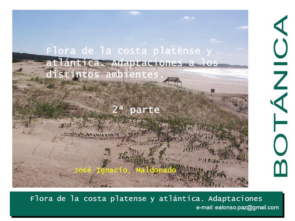 Flora de la costa platense y atlántica