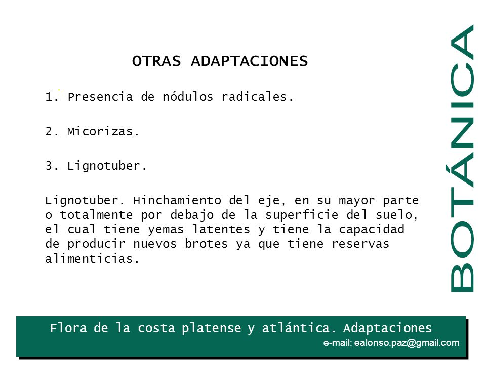 BOTÁNICA OTRAS ADAPTACIONES 1. Presencia de nódulos radicales.