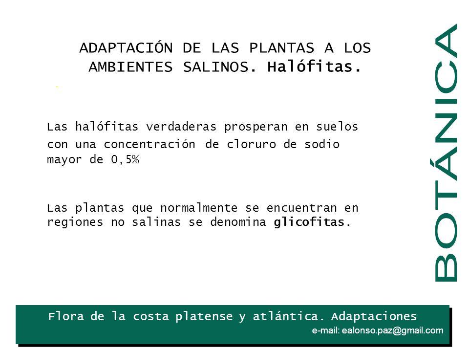 BOTÁNICA ADAPTACIÓN DE LAS PLANTAS A LOS AMBIENTES SALINOS. Halófitas.