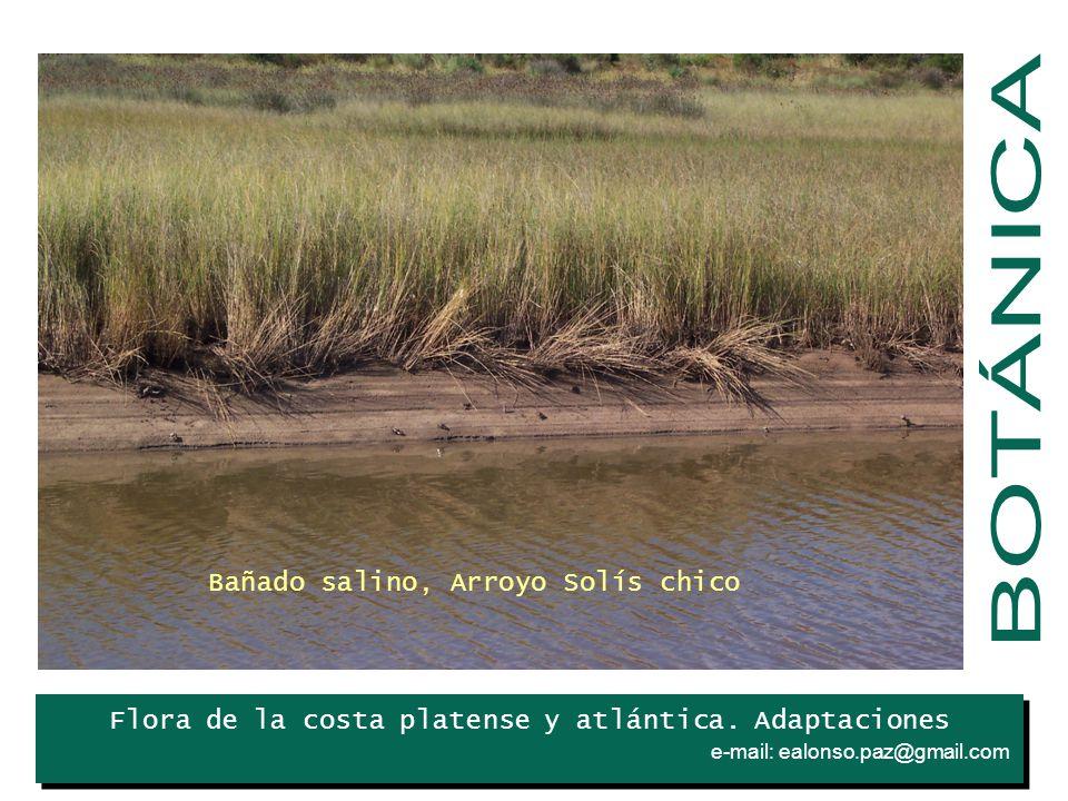 BOTÁNICA Bañado salino, Arroyo Solís chico Iris