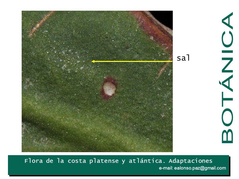 BOTÁNICA sal Iris Flora de la costa platense y atlántica. Adaptaciones