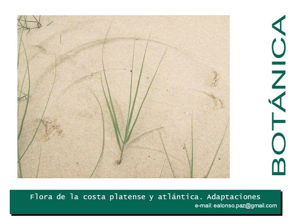 BOTÁNICA Iris Flora de la costa platense y atlántica. Adaptaciones .