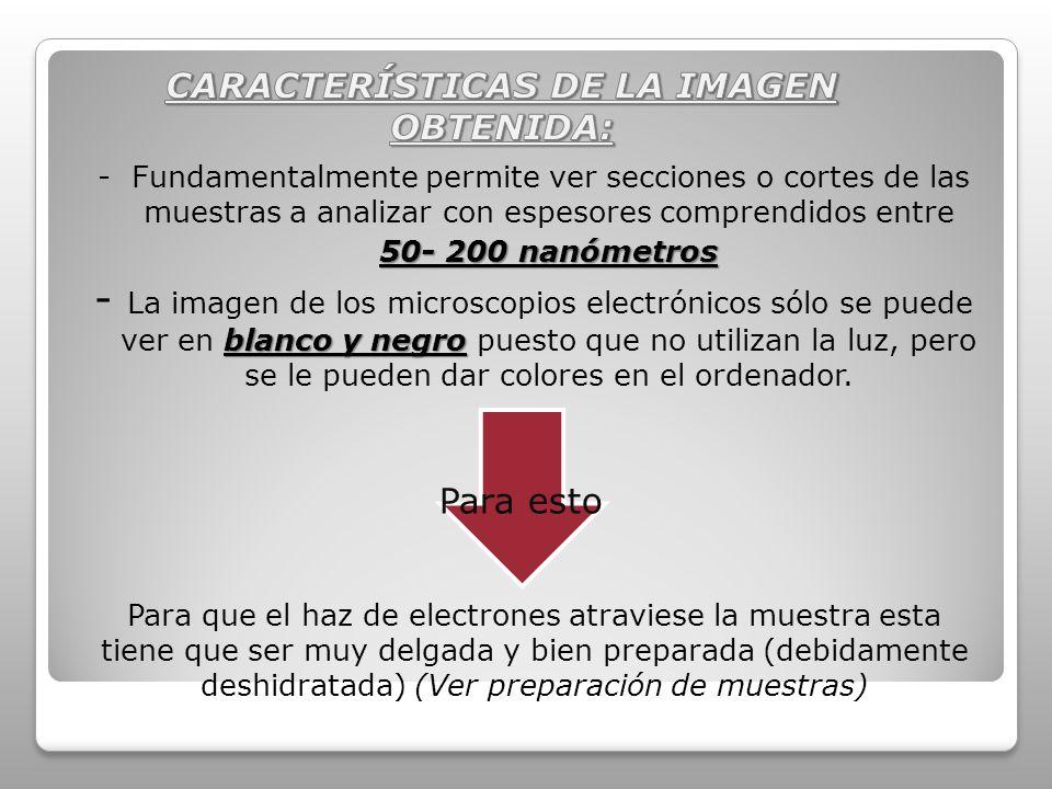 CARACTERÍSTICAS DE LA IMAGEN OBTENIDA: