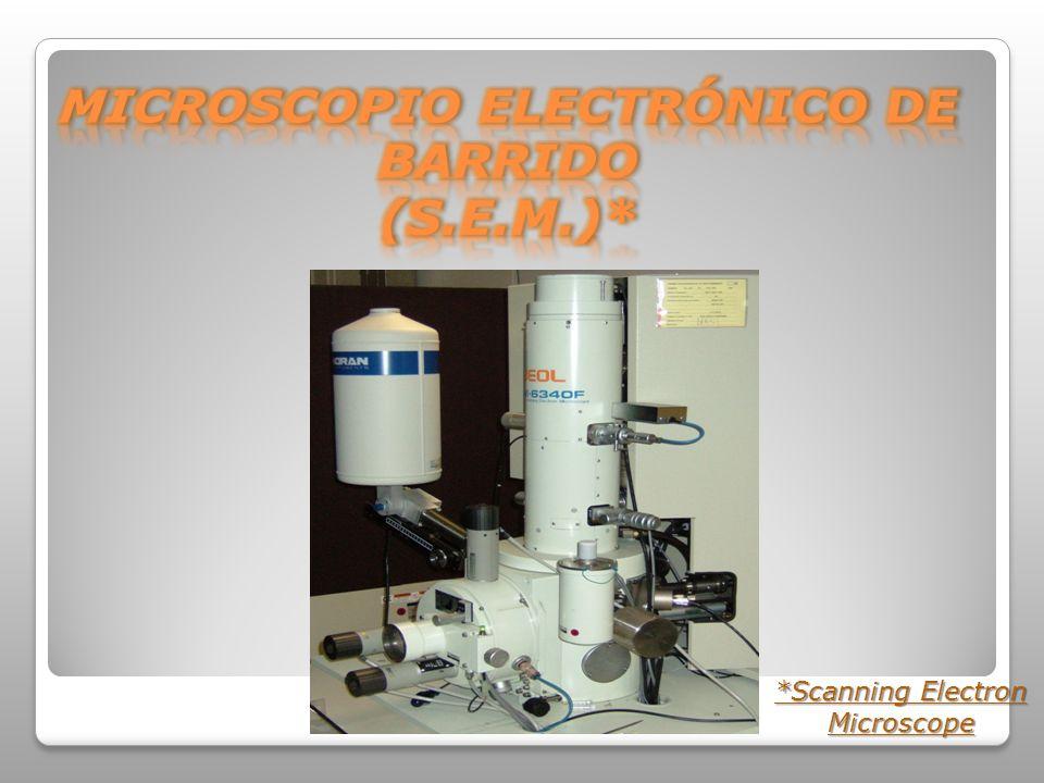 MICROSCOPIO ELECTRÓNICO DE BARRIDO (S.E.M.)*
